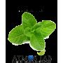 Atmos Lab Mint